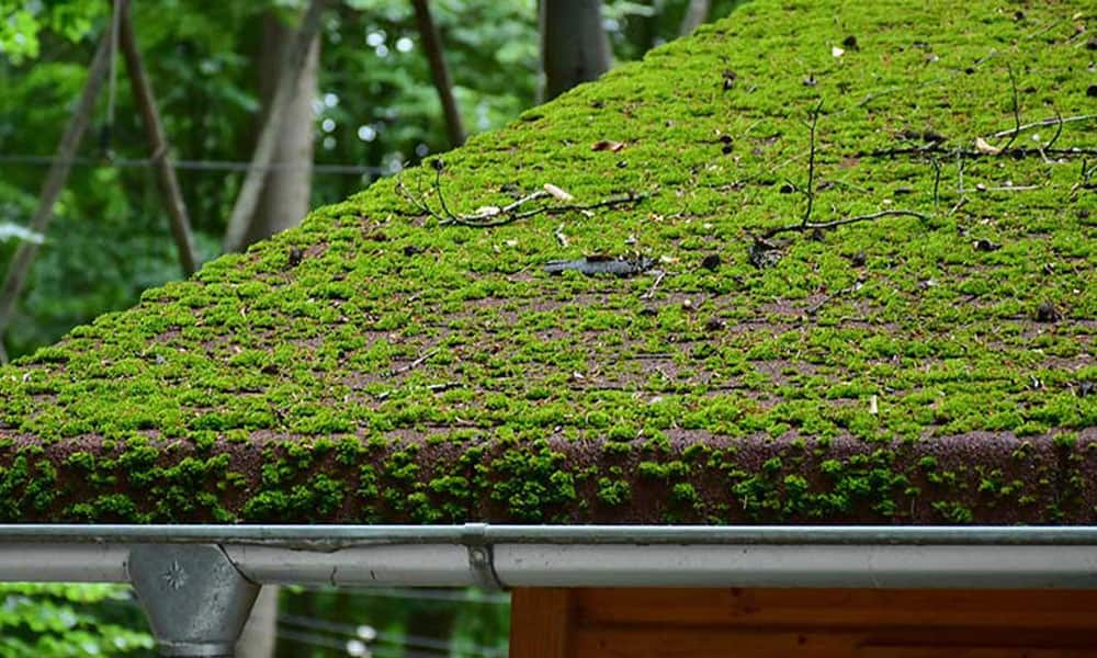 Moss Removal Method