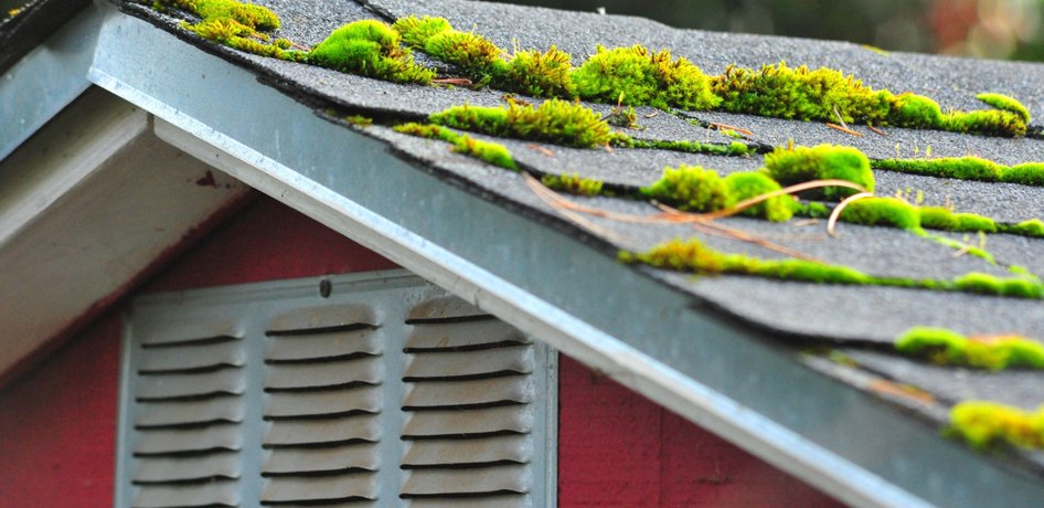 Roof Moss Removal Burnaby