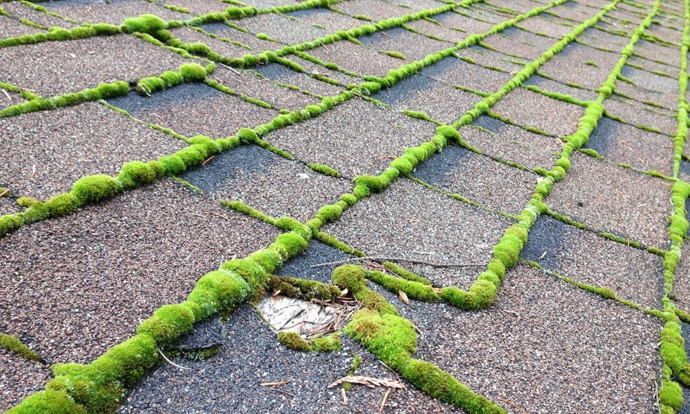 5 Tips For Roof Cleaning