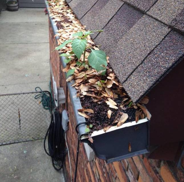 Gutter Cleaning Abbotsford
